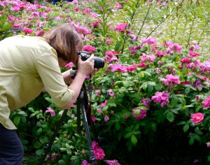 trädgårdsfoto_webb